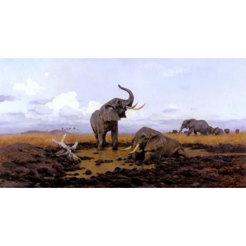 In The Twilight Elephants