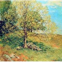 Budding oak