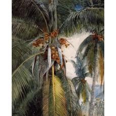 Coconut Palms Key West