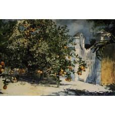 Orange Tree Nassau