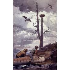 Osprey's Nest