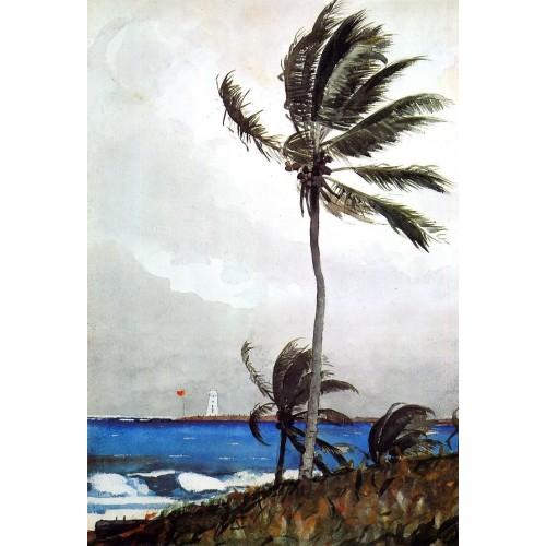 Palm Tree Nassau