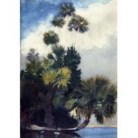 Palm Trees Florida