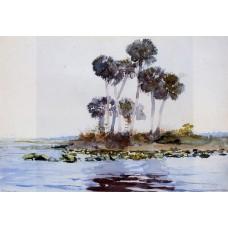 St John's River Florida 2