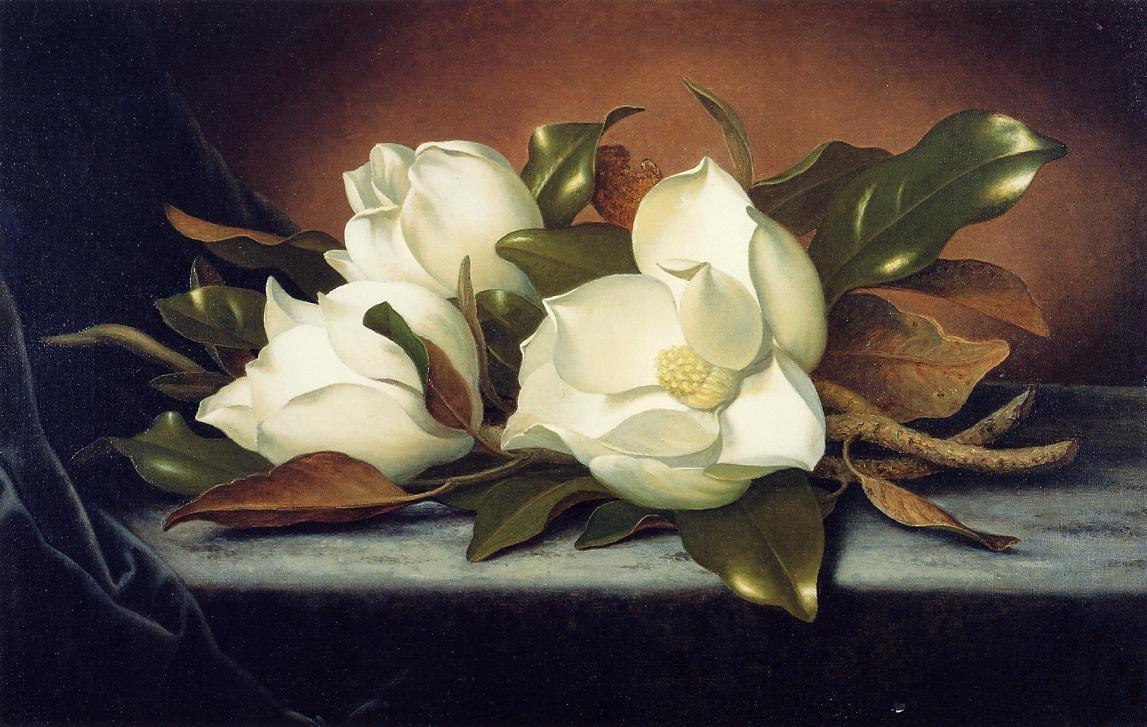 magnolia painting - photo #24
